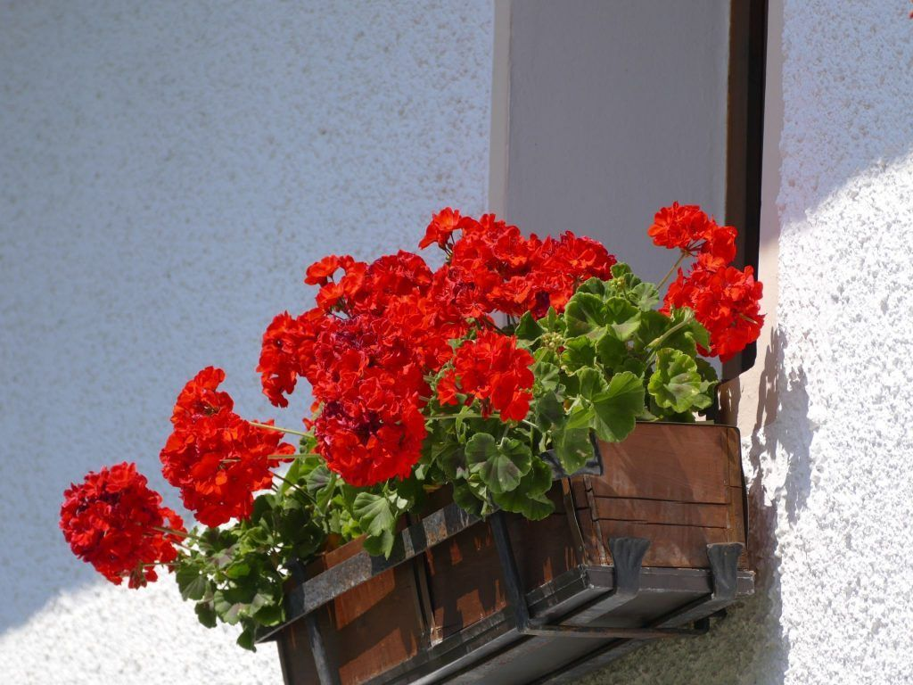 flowers-887467